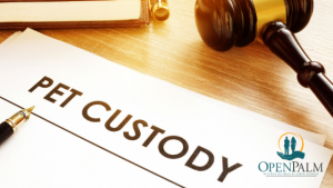 pet custody open palm law