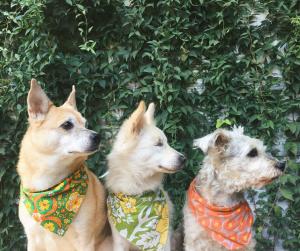 three dogs pet custody